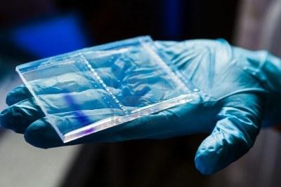 13761815-placa-de-gel-de-agarosa-para-la-separacion-de-adn-despues-de-la-electroforesis