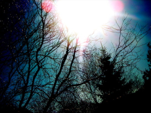 clouds-photography-sky-sun-trees-Favim.com-316399