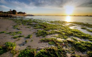 green_algae_hd_widescreen_wallpapers_2560x1600