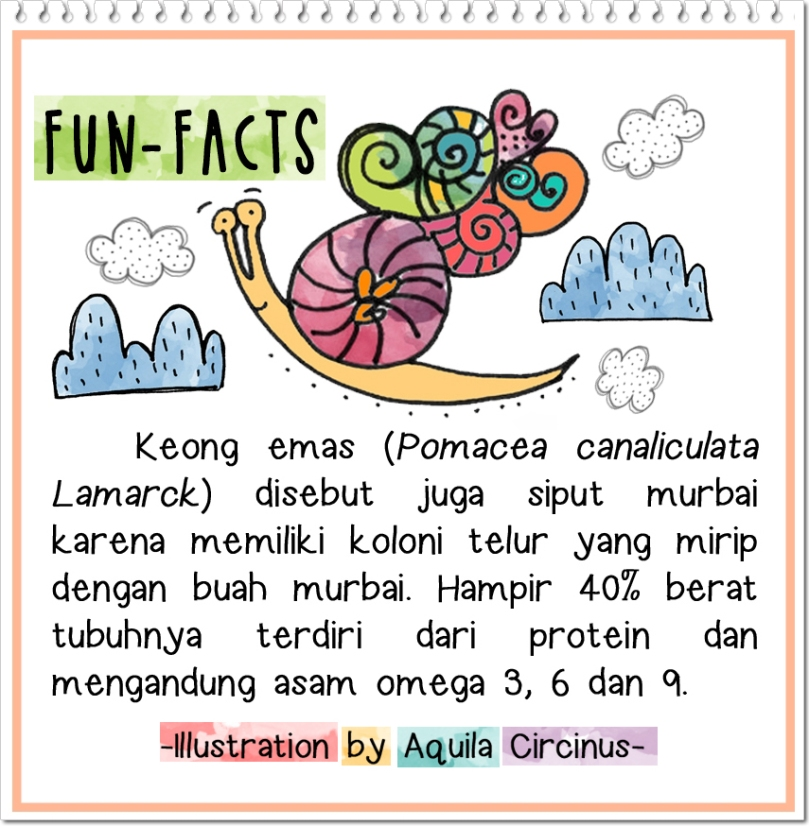 siput fact